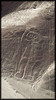 Nazca Lines : The mysterious lines of Nazca!